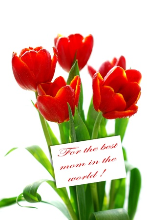 card for the best mom in the world and bunch of red tulips with water droplets in sunlight isolated on white Stock Photo - 19380349