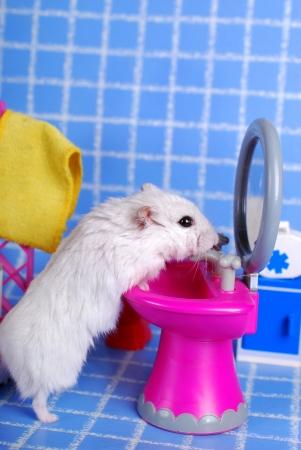 kleine witte hamster opruimen in de badkamer Stockfoto