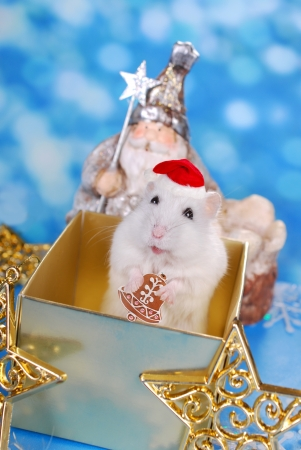 santa hamster: little white hamster with santa hat and gingerbread cookie standing in gift box as surprise for christmas Stock Photo