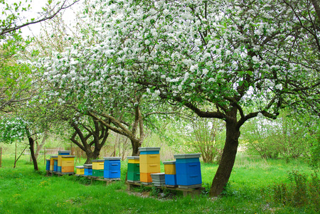 colorful beehives in spring orchard with apple trees Reklamní fotografie