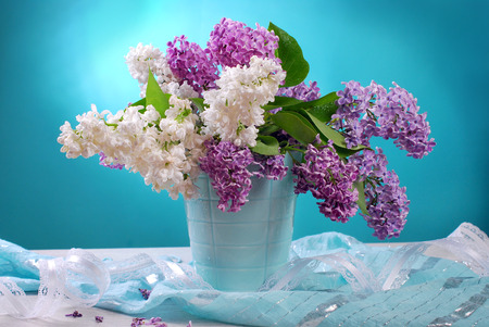 arranging: bunch of fresh white and purple lilac flowers in vase on blue background