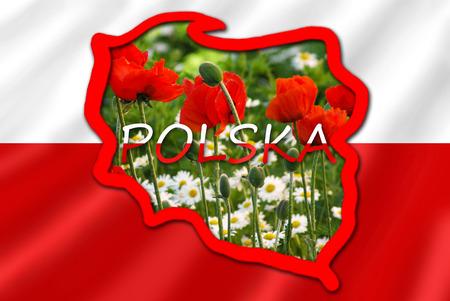 bandera de polonia: mapa estilizado de Polonia en la bandera blanca y roja llena con la imagen del típico para las flores de este país en el prado Foto de archivo