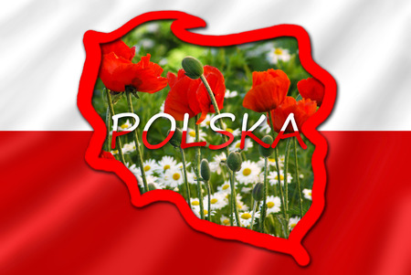 polish flag: stylized map of Poland on white and red flag filled with image of typical for this country flowers in the meadow Stock Photo