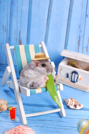 funny hamster wearing hat relaxing on deck chair and eating a pod of green peas Standard-Bild