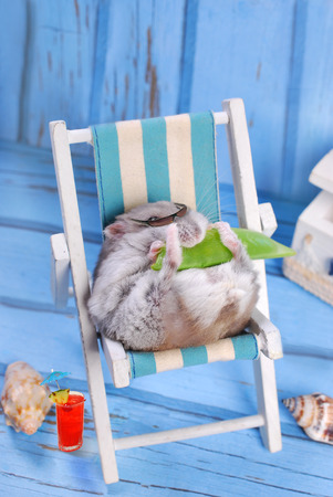 funny hamster wearing sunglasses relaxing on deck chair and eating a pod of green peas