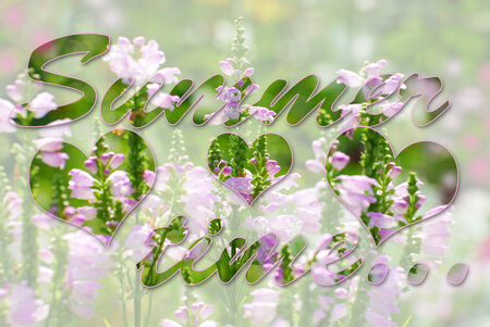 summer time: beautiful bright colors flowers in summer garden and darker words summer time with heart shapes