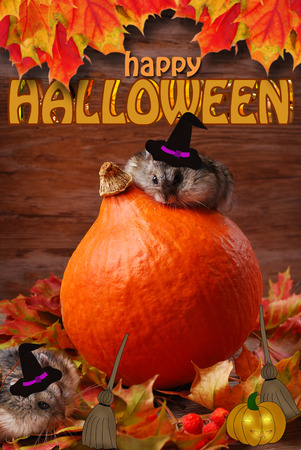 hamster on a pumpkin and one in autumn leaves  wearing drawn witch hats on wooden background for halloween photo