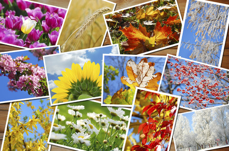 beautiful collection of many images with four seasons of the year on wooden  photo