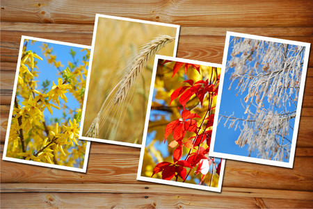 and four of the year: beautiful collection of  images with four seasons of the year on wooden  Stock Photo