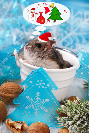 santa hamster: little hamster in santa hat sitting in pot and dreaming about christmas
