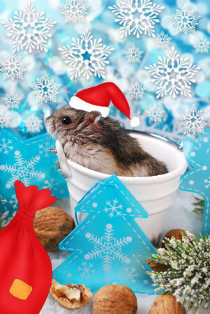 little hamsterwearing santa hat in pot at christmas background