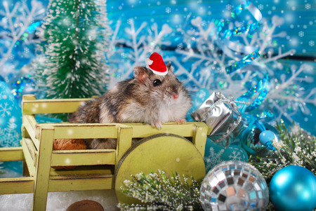 little hamster in santa hat sitting in wooden cart waiting for christmas Stock Photo