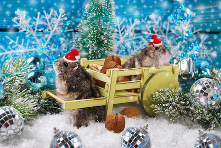 santa hamster: two little hamsters in santa hats waiting for christmas in winter scenery