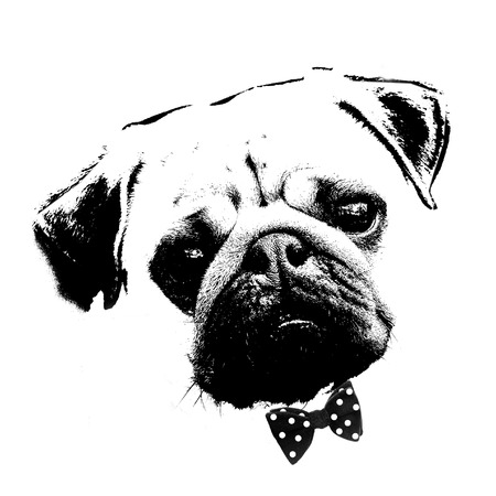 black and white graphic style portrait of cute pug dog with bow tie
