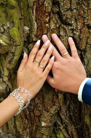 anillos boda: manos de la novia y el novio con anillos de boda en el fondo de la corteza de árbol