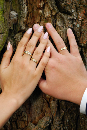 gold ring: hands of bride and groom with wedding rings on tree bark background