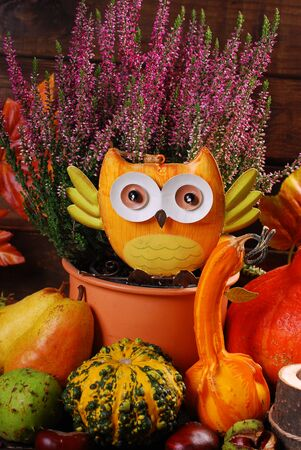 harvest background: autumn harvest still life with  pumpkins,owl,leaves,chestnuts and heather flowers on wooden background