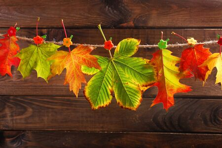 buckled: colorful autumn leaves hanging on a rope against  wooden background