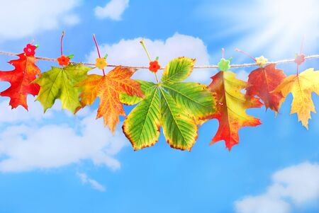 buckled: colorful autumn leaves hanging on a rope against blue sky Stock Photo