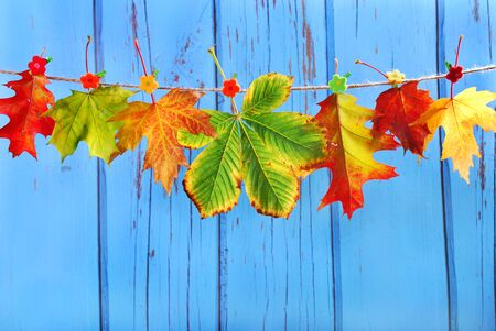 buckled: colorful autumn leaves hanging on a rope against blue wooden background Stock Photo