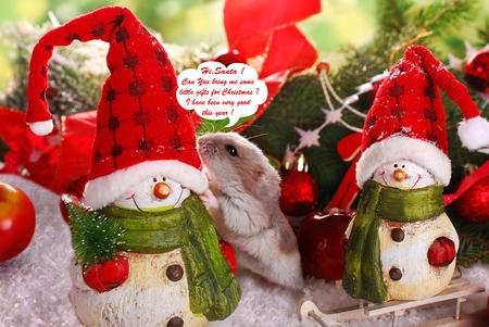 funny little hamster asking santa figurine for christmas gift Stock Photo