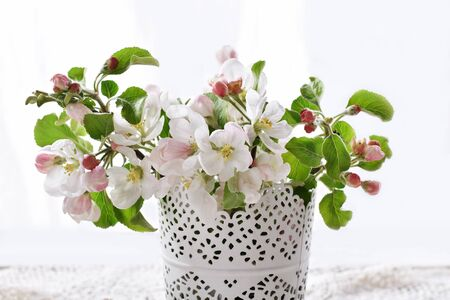 closeup of spring apple blossoms in vase isolated on white  免版税图像