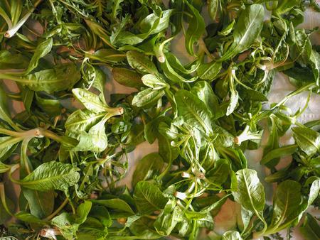 lactuca: Lettuce (Lactuca sativa) leaf vegetables vegetarian food useful as background Stock Photo