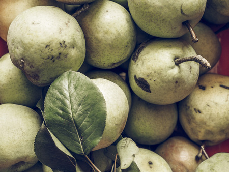 pyrus: Vintage faded Pear (Pyrus) fruits, healthy vegetarian food useful as a background