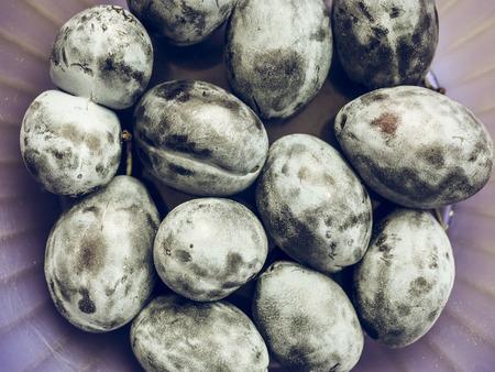 ciruela pasa: El vintage se descoloró ciruelo de ciruela (Prunus domestica) también conocido como frutos de ciruela europeos, comida vegetariana saludable