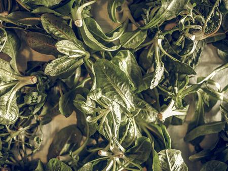 lactuca: Vintage faded Lettuce (Lactuca sativa) leaf vegetables vegetarian food useful as background