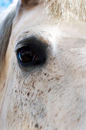 The big black eye beautiful white horses photo