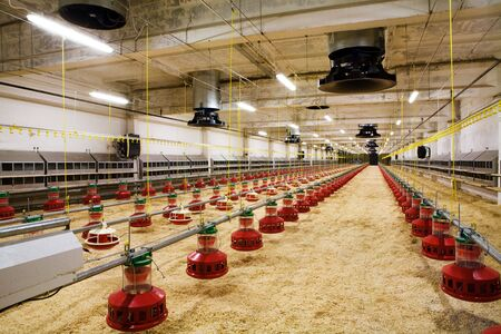 poultry farm: The modern and new automated integrated poultry farm