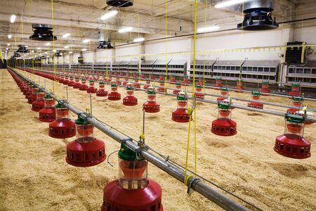 Le moderne et intégré de nouveaux automatisé élevage de volailles Banque d'images