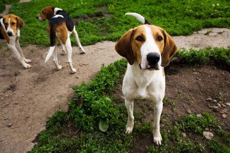 bitch: Rack de perros de perros en la ma�ana de verano