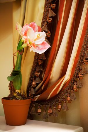 life events: indoor flower on a background of curtains in the apartment Stock Photo