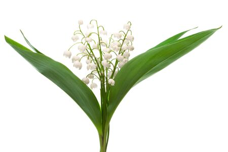 springy: bouquet of lily of the valley on a white background