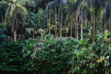 tropical forest with beautiful palm trees photo
