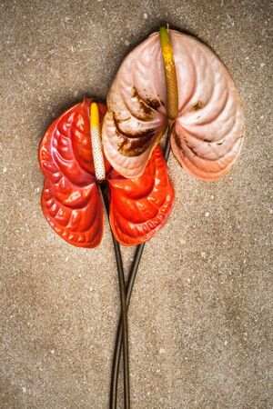 beautiful two anthurium on a brown marble photo