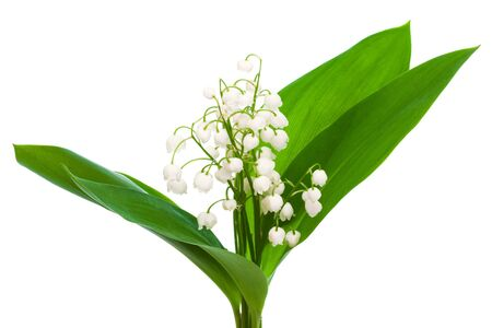 bouquet of lily of the valley on a white background photo