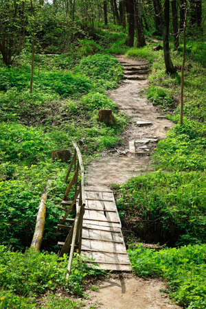 bridge and trail in the summer woods Stock Photo - 8374475
