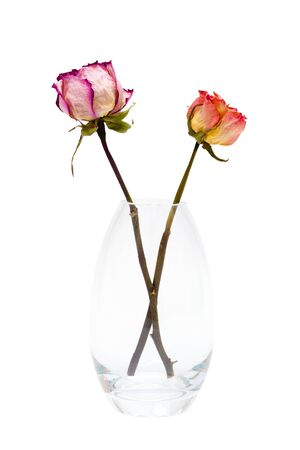 two of dried roses on a white background photo