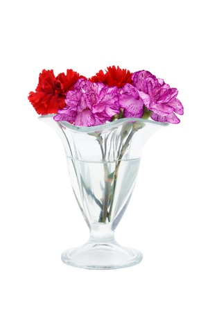 carnation in a glass vase on a white background photo