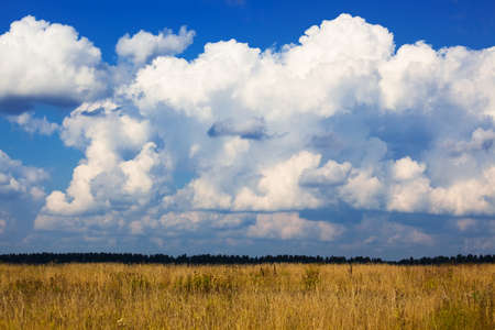 white clouds over a yellow field Stock Photo - 9370320