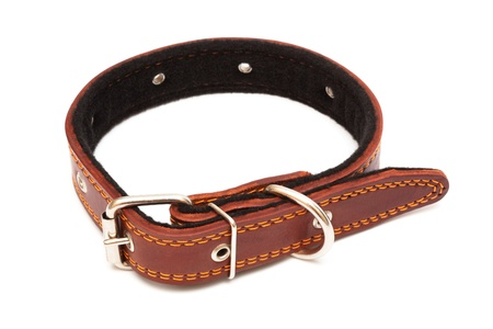 fetishes: Leather dog collar on a white background Stock Photo