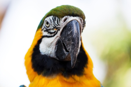 beautiful head parrot close up photo