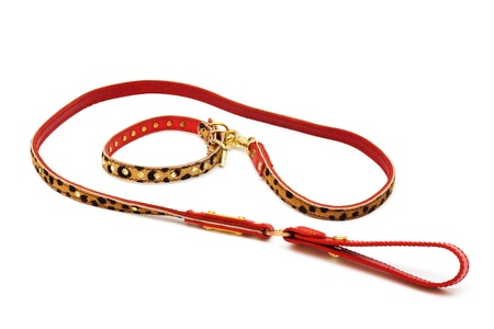 nice leash and collar on a white background photo