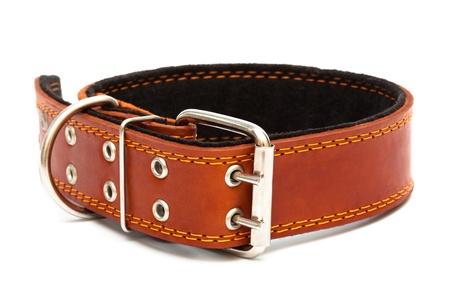 Leather dog collar on a white background Archivio Fotografico