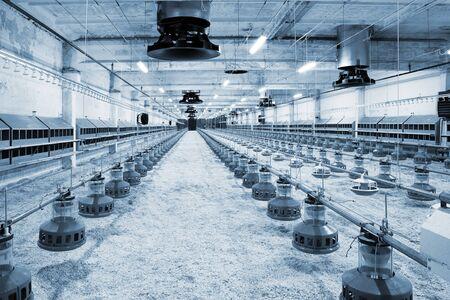 granja avicola: El moderno y nuevo granja avícola automatizada integrada Foto de archivo