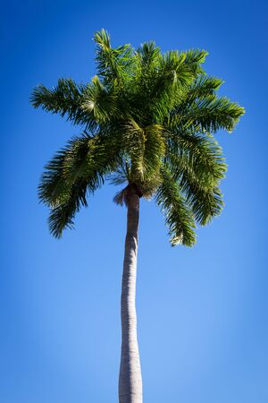 beautiful palm tree against a blue sky Stock Photo - 16954258