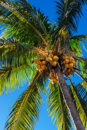 beautiful palm tree against a blue sky Stock Photo - 17605079